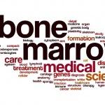 שלט שעליו כתובות המילים מח עצם