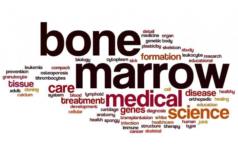זכויות למושתלי מח עצם